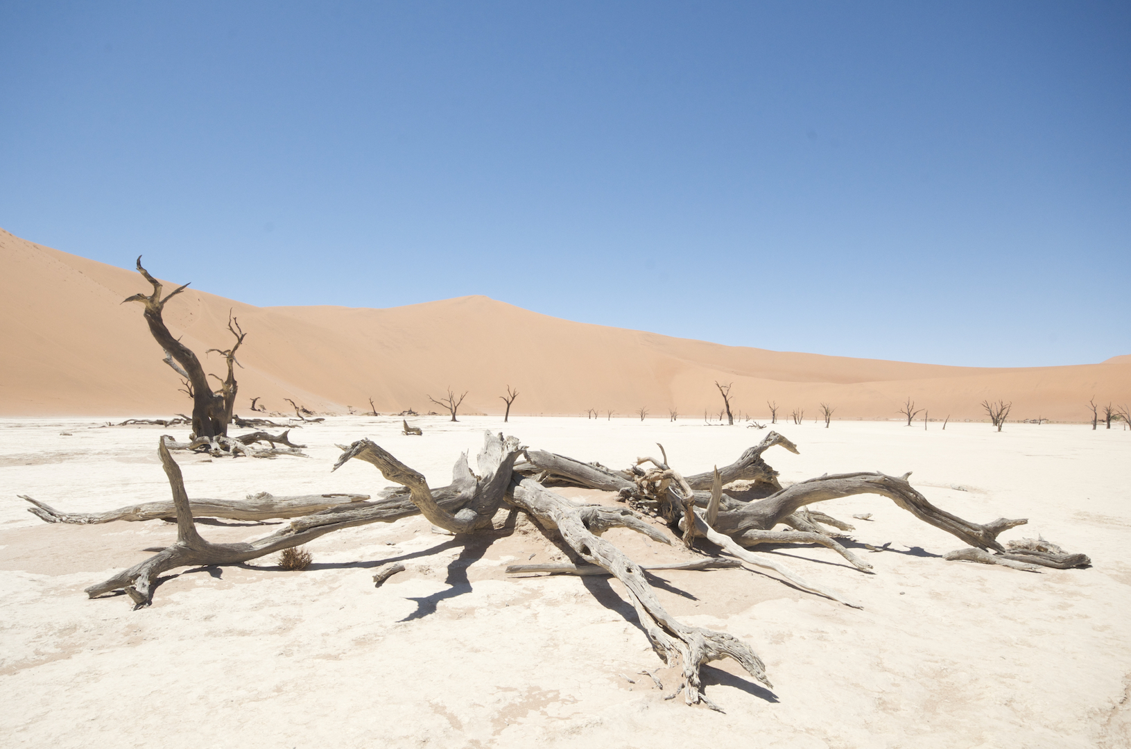 things to do in Namibia: visit deadvlei