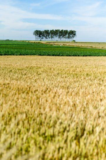 Field view - Vlaamse Ardennen