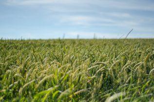 Fields - Vlaamse Ardennen