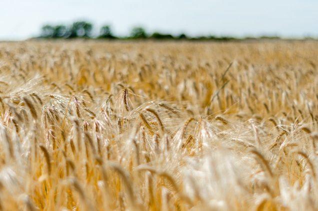 Grain - Vlaamse Ardennen