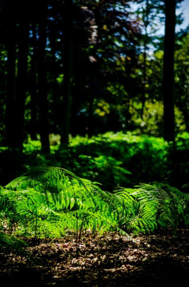 Landscape Muziekbos, Ronse - Vlaamse Ardennen
