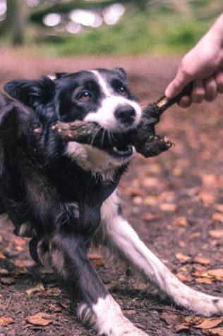 2. Dog
