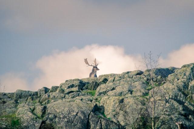 Watch wildlife in Älghägnet