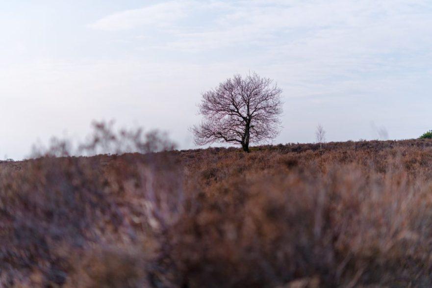 Lemelerberg - Overrijsel