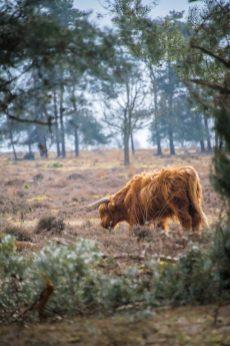 Deelerwoud - Gelderland