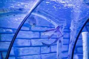 shark inside a tank