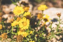 Plants Malta