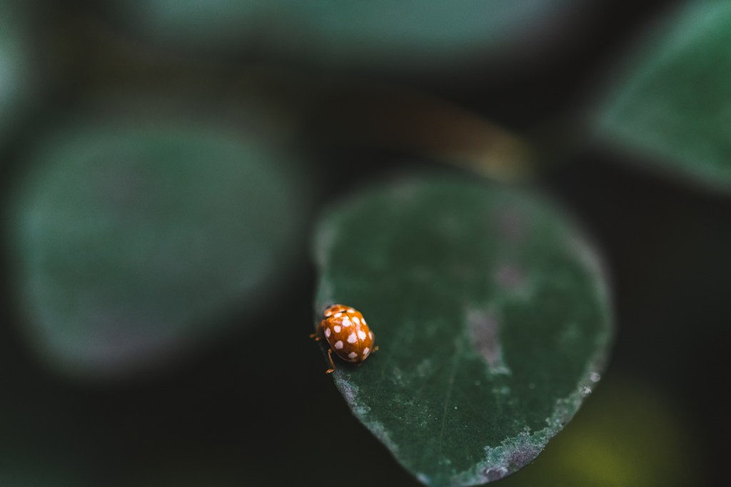 macro photography tips for ladybirds