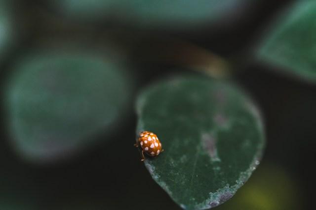 macro photography tips for ladybirds