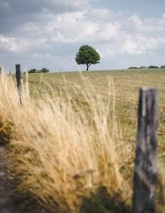A lonely tree in Nordrhein Westfalen