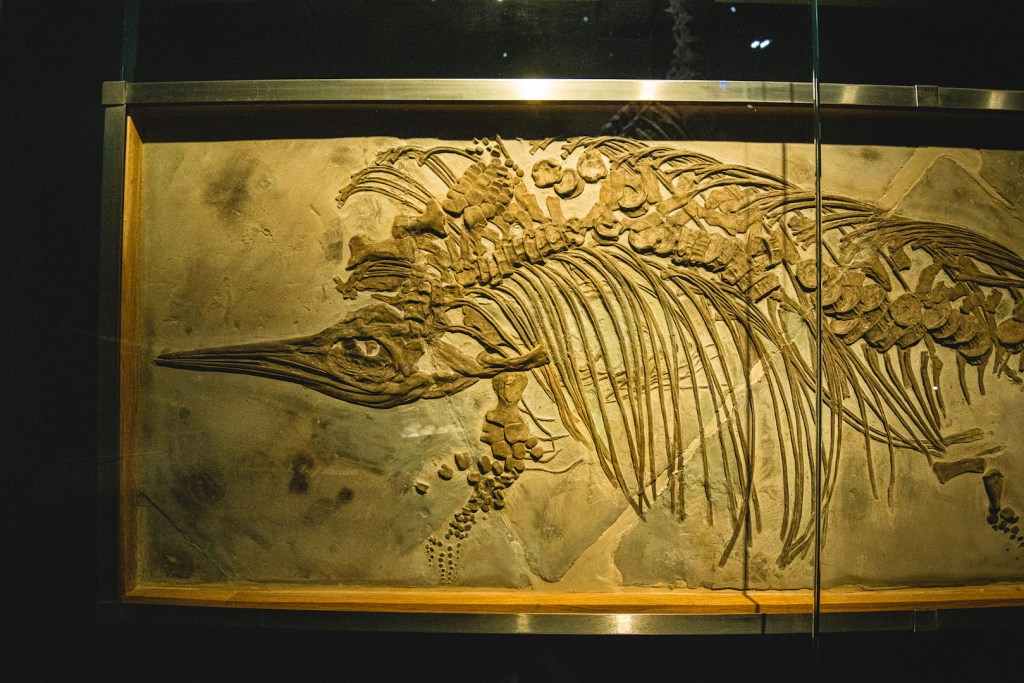 ichtyosaurus fossiel