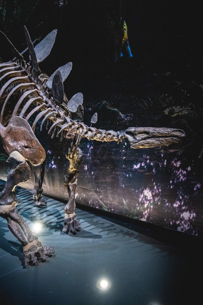 stegosaurus in naturalis