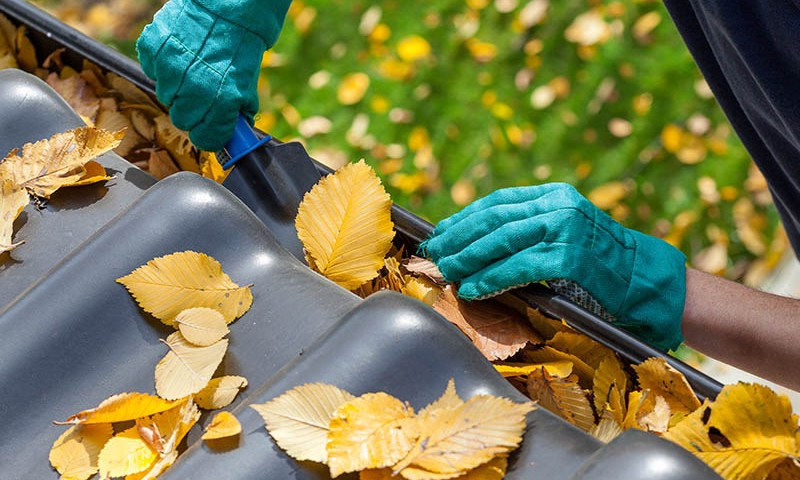 Leaf removal maintenance