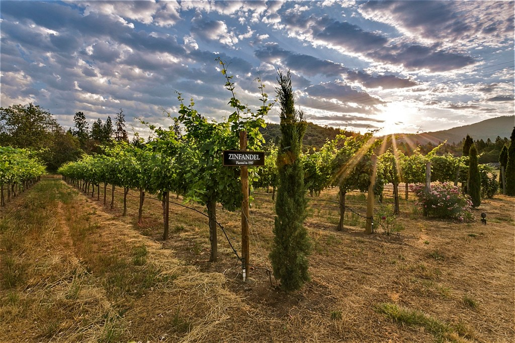 Troon Vineyard: Reviews of Current Releases