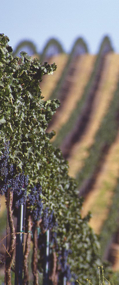 Vina Robles Estate Cabernet Sauvignon & two other new releases