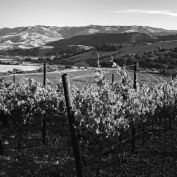 Dierberg Pinot Noir and Chardonnay: 3 New Releases