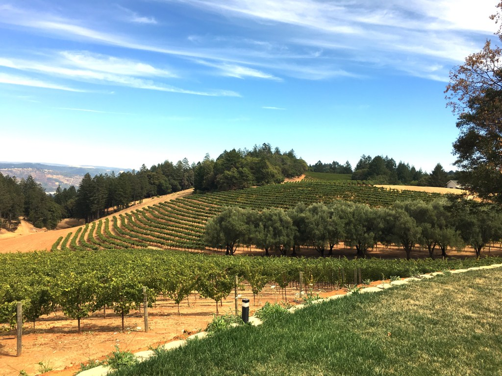 Taste Dozens Of Spring Mountain Wines In Sf Visit Napa Valley Too