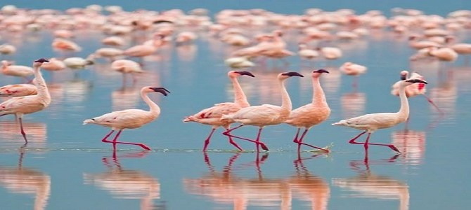 Mumbai's winter guests – Flamingoes