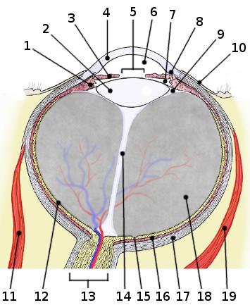 Free Anatomy Quiz - The anatomy of the Eye - Quiz 1