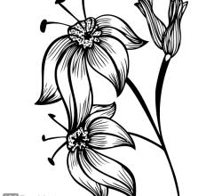 Flourish Design Image