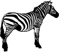 Zebra Free Vector Clip Art