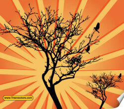 Sunburst Tree Vector