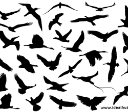Vector Flying Bird Silhouettes