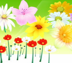 Free Vector Flowers