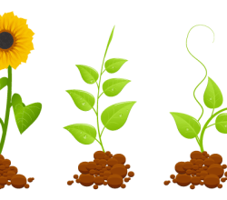 Eco Germinal Plants Free Vector