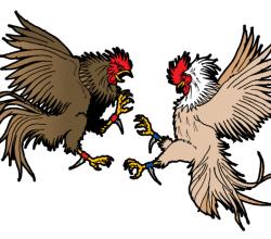 Cockfighting Vector Art