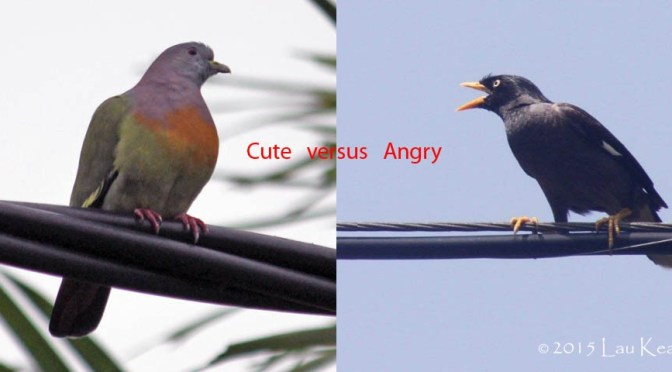 Territorial Dispute Face-off Between Cute vs Angry