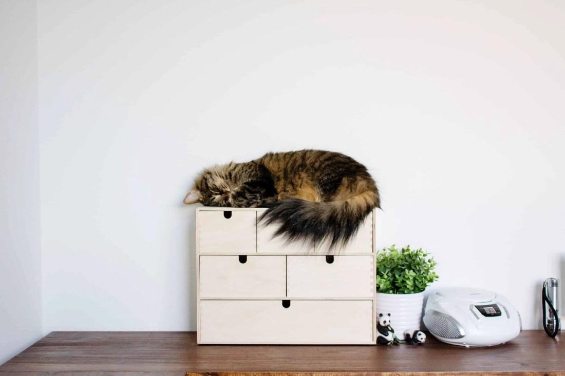 cat sleeping on new corner IKEA hack desktop in homeschool room