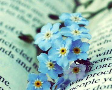 Blue Flowers On The Book