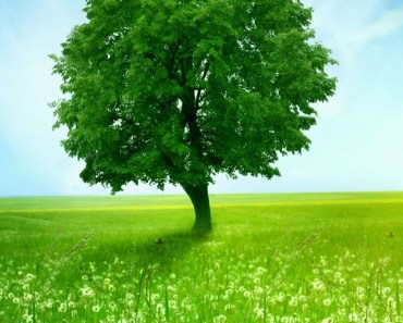 Green Tree and Meadow