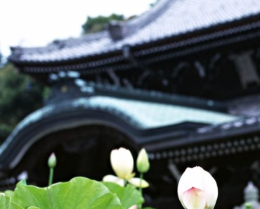 Lotus and Chinese-style Architecture