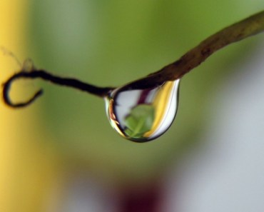Dewdrop On The Branch