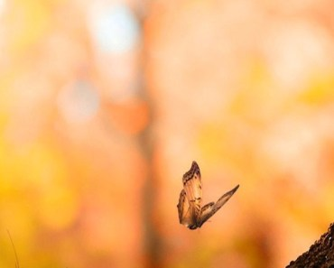 Flying Butterfly Bokeh