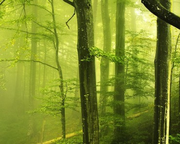 Ancient Forests
