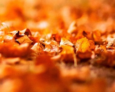 Autumn Withered Leaves