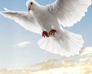 Flying Peace Dove