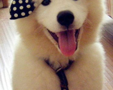 White Dog with Black Bow