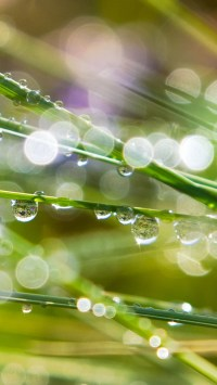 Shining Dew Drops with Halos