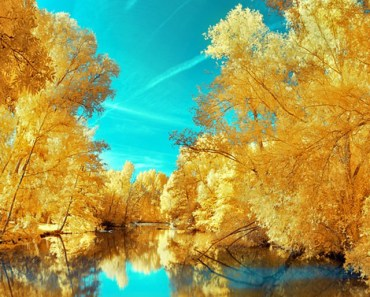 Yellow Gold Trees