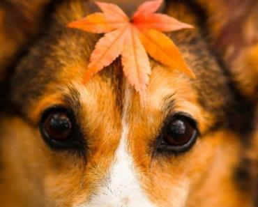 Cute Puppy In Autumn
