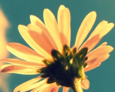 Small Yellow Flower In The Sun
