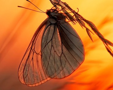 Butterfly Sunset