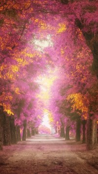 Colorful Forest Path