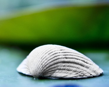 Shell On The Leaf