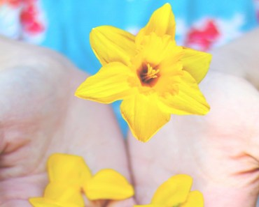 Yellow Flowers In Hands