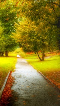 Autumn Path After The Rain